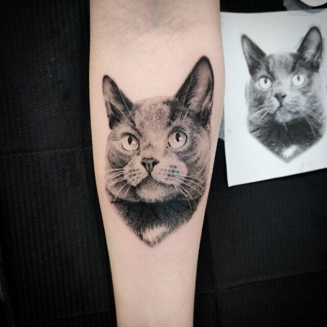 #kissa kaverista #tatuointi  #artelysior #tattooparlour #artcollective #hyvinkää  #cat #tattoo